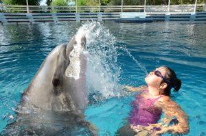 delfin, delfin terapie, delfino terapie, turcia, Antalya, delfin terapie copii